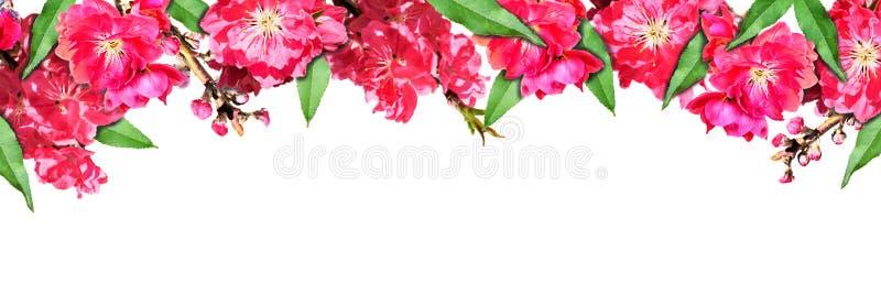 Sfondo naturale con i fiori e le foglie della pesca fotografie stock
