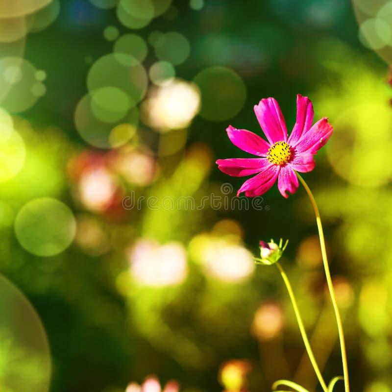 Sfondo naturale con il fiore porpora fotografia stock