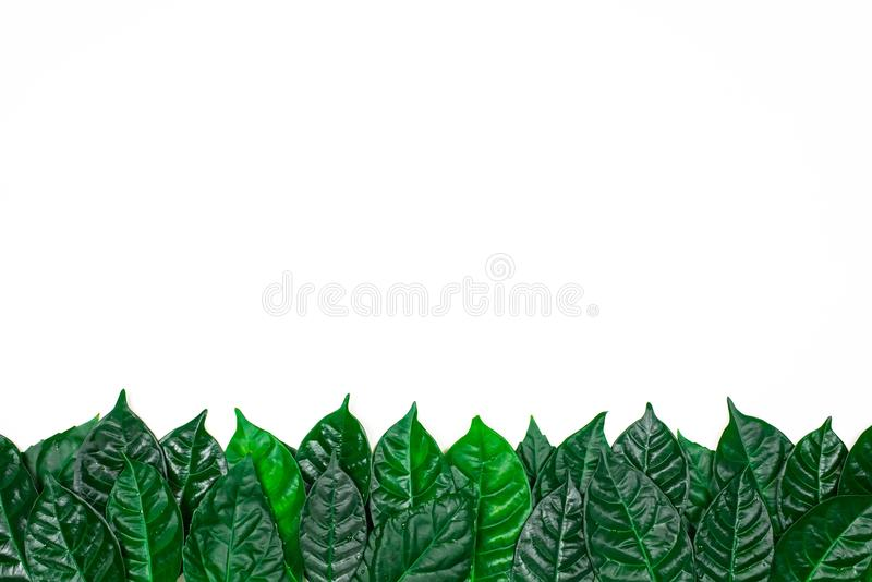 Sfondo naturale con le foglie verdi isolate su fondo bianco fotografie stock libere da diritti