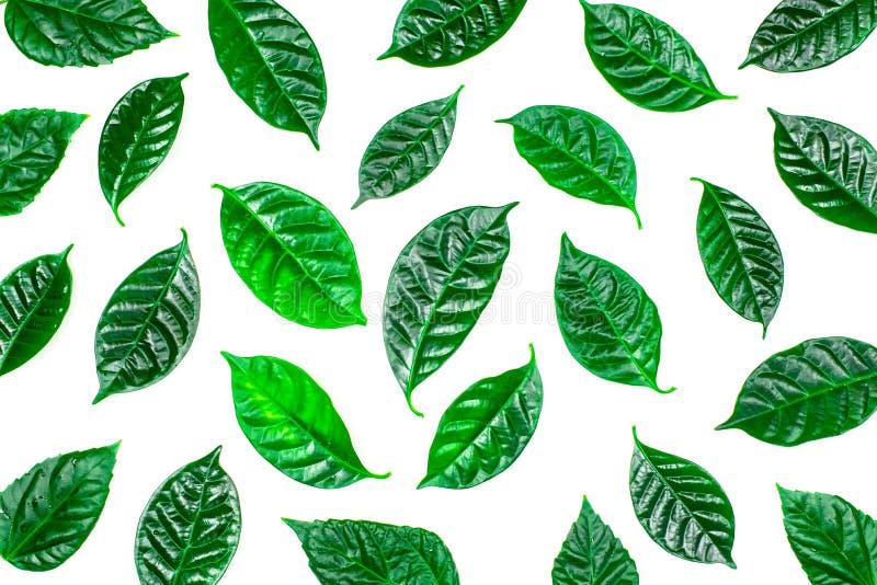 Sfondo naturale con le foglie verdi isolate su fondo bianco immagine stock libera da diritti