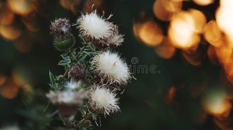 Sfondo naturale con le piante selvatiche nei colori verde-cupo con le luci soleggiate arancio del bokeh, paesaggio di autunno di  fotografia stock libera da diritti