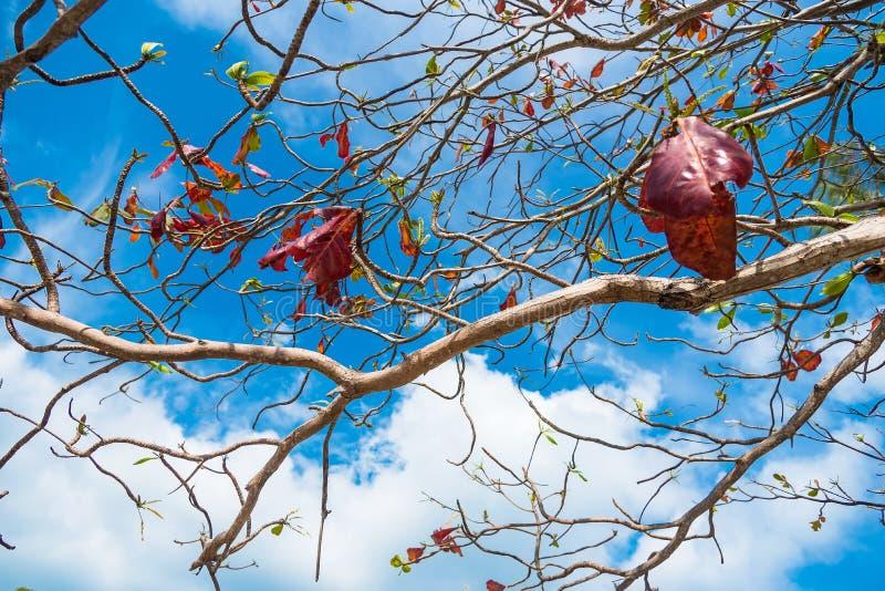 Sfondo naturale dei rami di albero thailand immagini stock libere da diritti