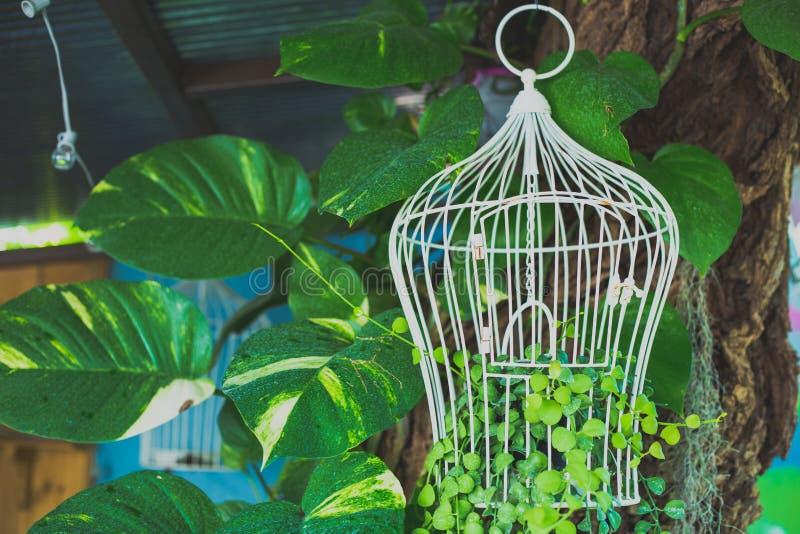 Sfondo naturale del birdcage d'acciaio bianco, per il deco della caffetteria fotografia stock
