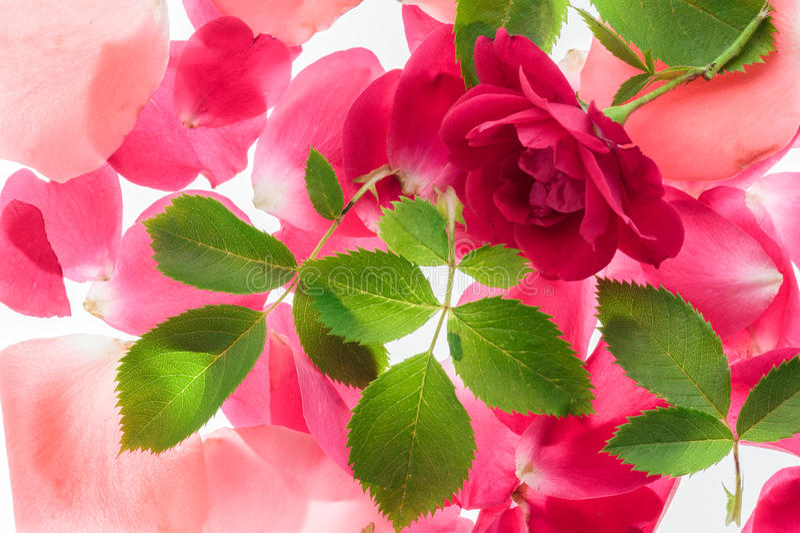 Sfondo naturale del fiore fotografia stock