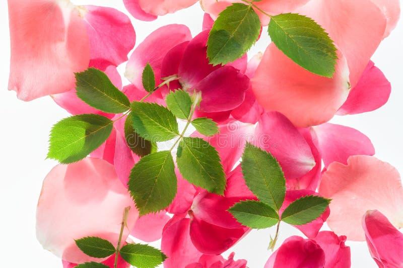 Sfondo naturale del fiore fotografie stock
