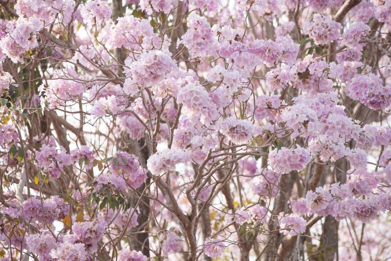 Sfondo naturale del fuoco molle del fiore della primavera fotografie stock
