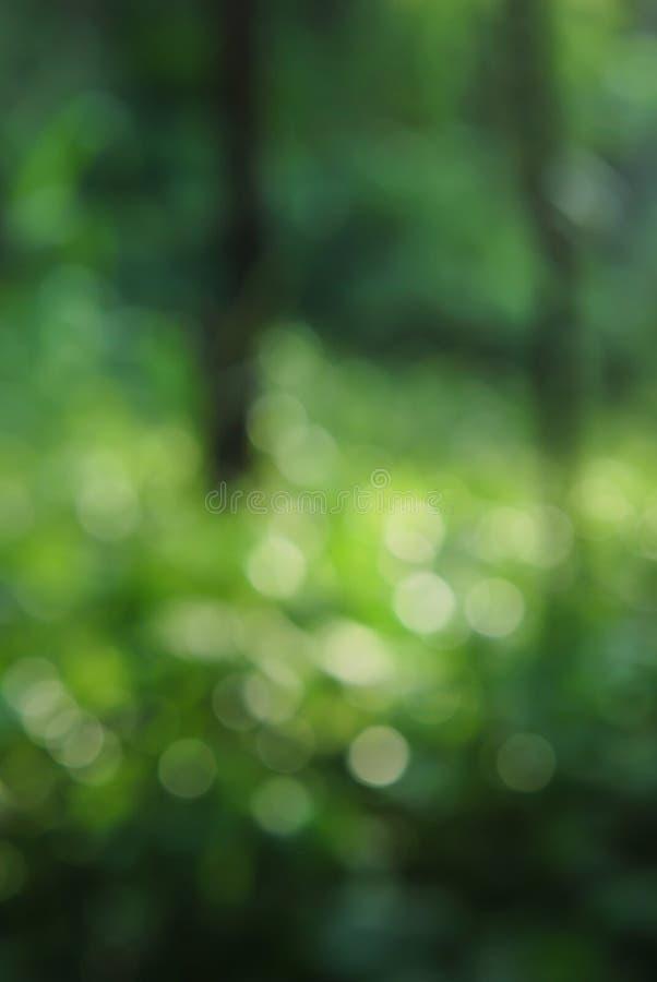 Sfondo naturale della sfuocatura verde astratta fotografie stock