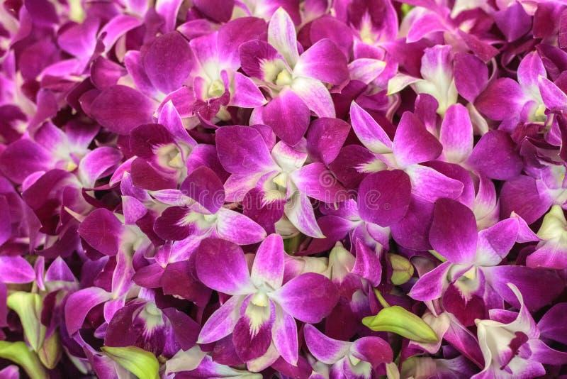 Sfondo naturale delle belle orchidee porpora Mercato del fiore a Bangkok, Tailandia immagine stock libera da diritti