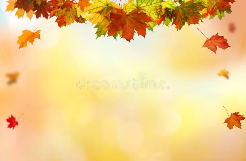 Sfondo naturale delle foglie cadenti immagini stock