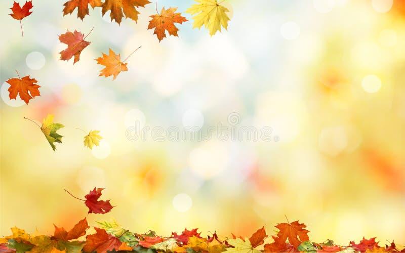 Sfondo naturale di caduta delle foglie di acero di autunno fotografia stock