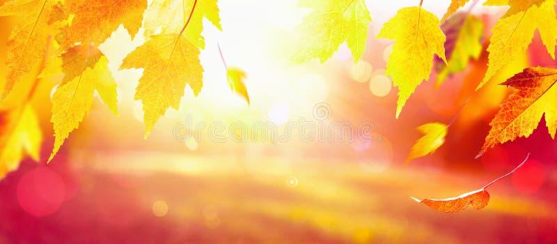 Sfondo naturale di caduta delle foglie di acero di autunno fotografia stock libera da diritti