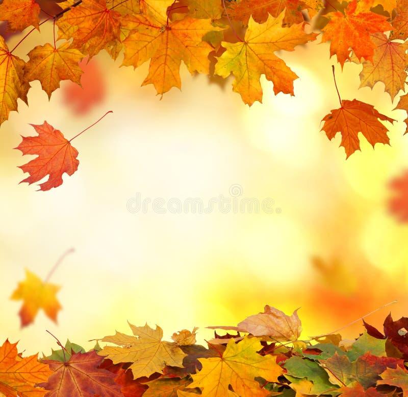 Sfondo naturale di caduta delle foglie di autunno fotografia stock