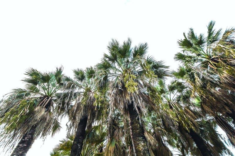 sfondo naturale di estate delle palme fotografie stock