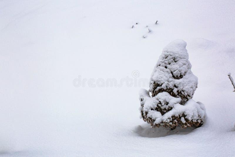 Sfondo naturale di inverno stupefacente Tiro verde gelido di giovani alberi isolati fotografia stock libera da diritti