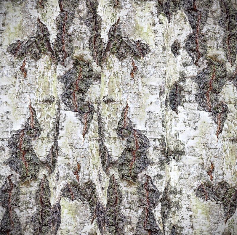 Sfondo naturale fatto della corteccia di betulla immagini stock libere da diritti