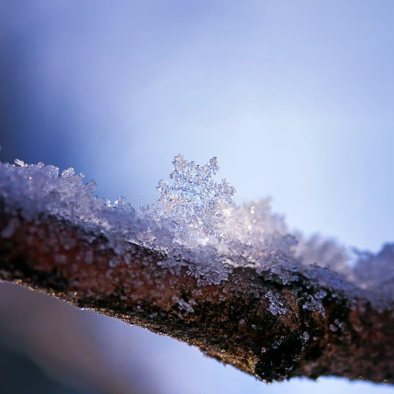 Sfondo naturale festivo con un bello lyi scolpito del fiocco di neve fotografia stock libera da diritti