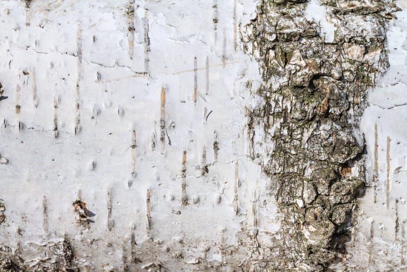 Sfondo naturale - la struttura orizzontale di un primo piano reale della corteccia di betulla fotografie stock libere da diritti