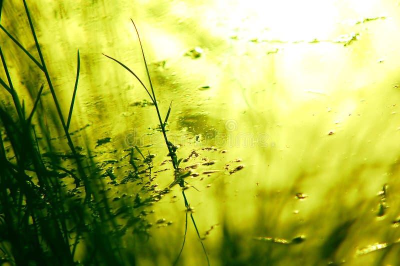 Sfondo naturale verde fotografia stock