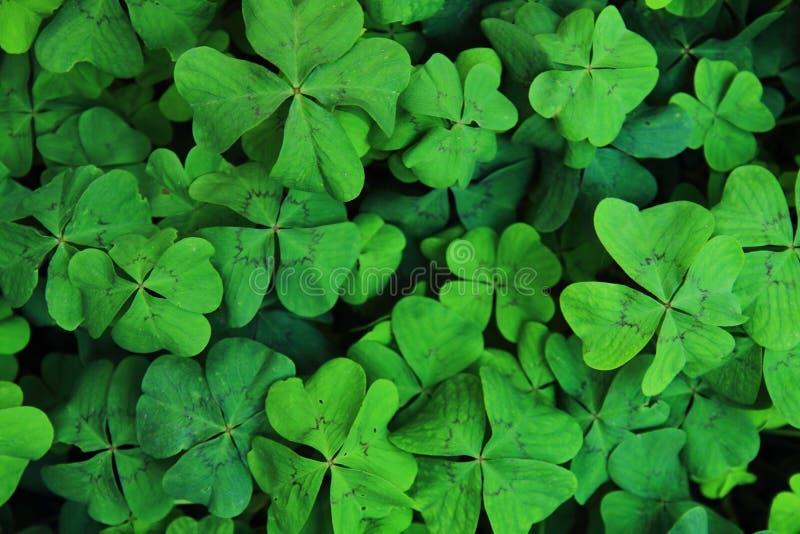 Sfondo naturale verde immagini stock