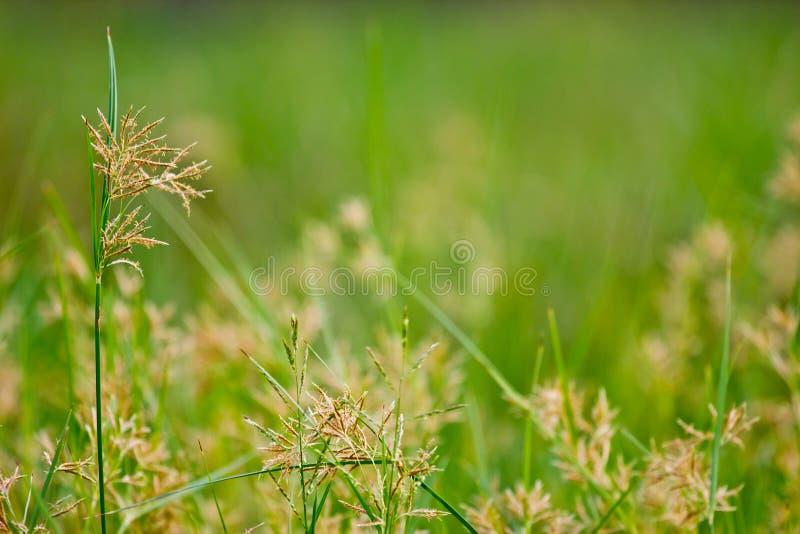 Sfondo naturale verde astratto immagine stock libera da diritti