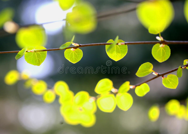 Sfondo naturale verde astratto fotografia stock