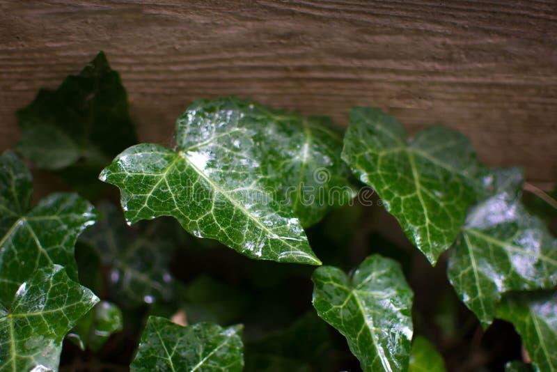 Sfondo naturale verde fotografia stock libera da diritti