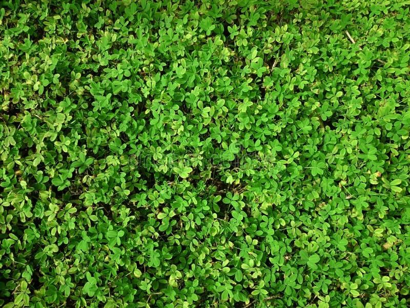 Sfondo naturale verde di piccole foglie Estate o spr della pianta fotografie stock libere da diritti