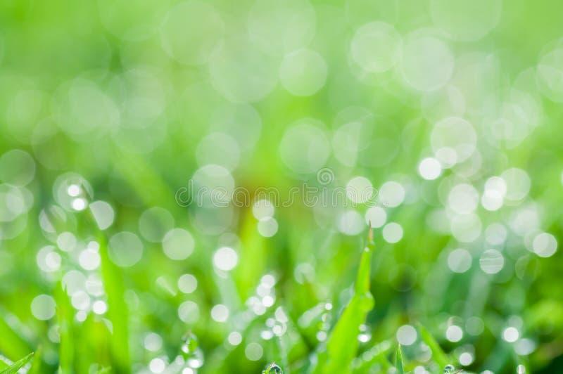 Sfondo naturale verde fresco astratto Defocused fotografie stock