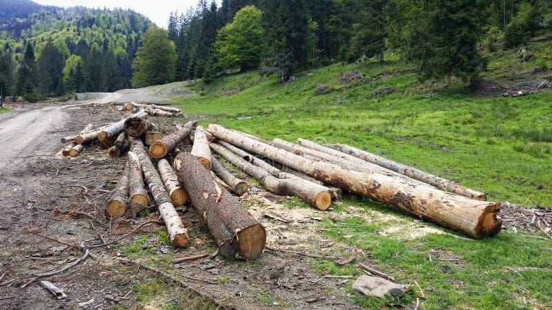 Sfruttamento delle foreste immagine stock