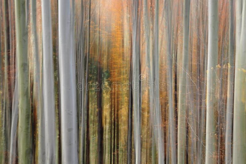 Sfuocatura astratta della foresta fotografia stock