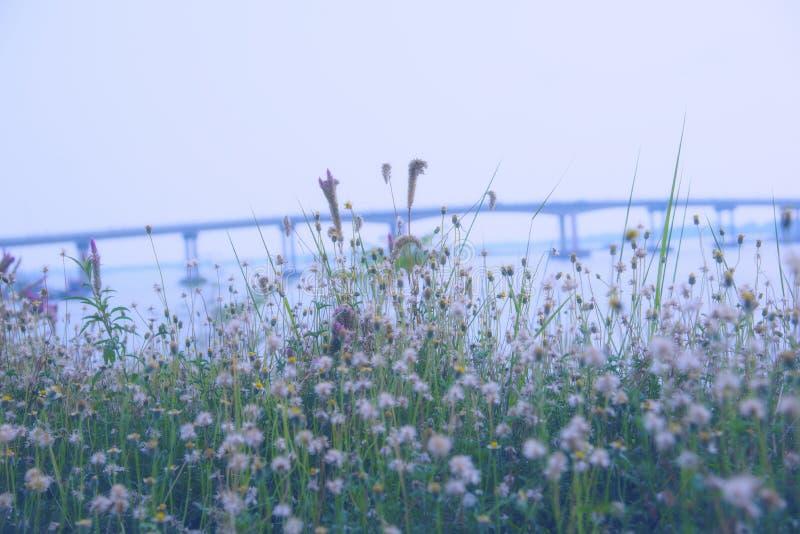 Sfuocatura dei fiori dell'erba fotografia stock