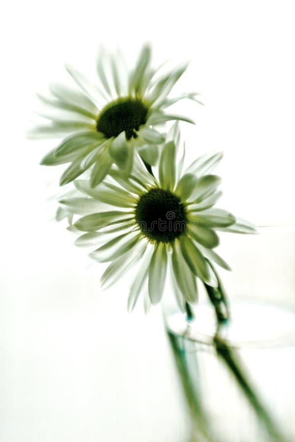 Sfuocatura floreale fotografie stock