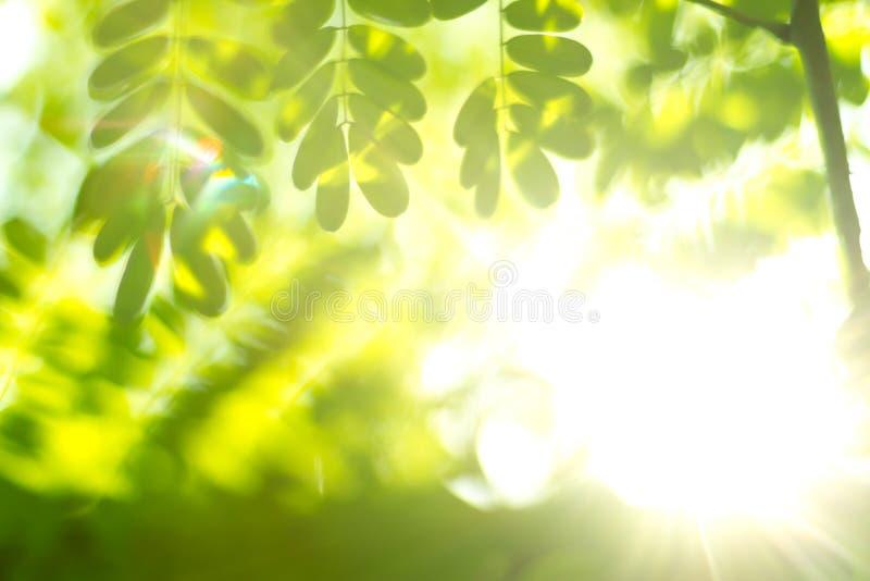 Sfuocatura verde naturale immagini stock