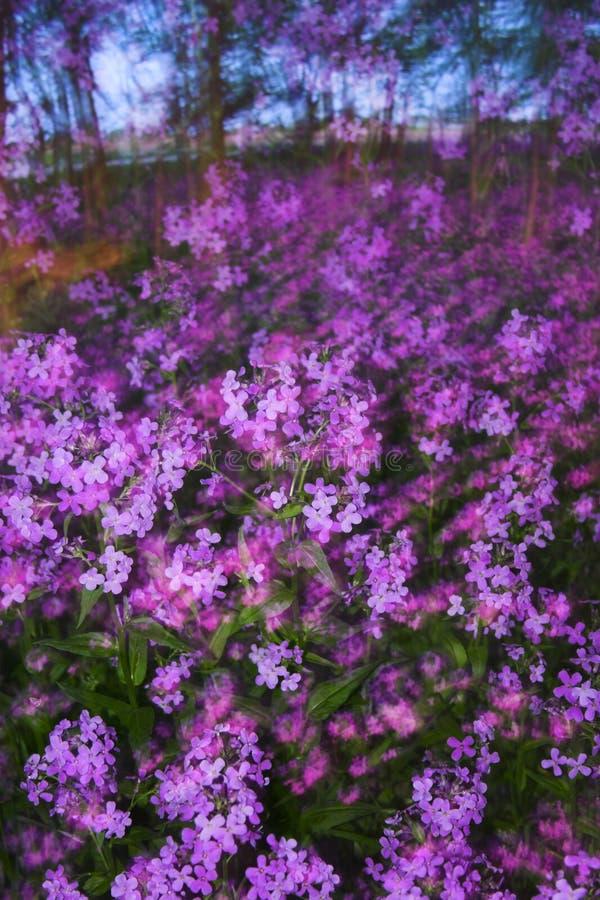 Sfuocature degli estratti con i fiori fotografia stock