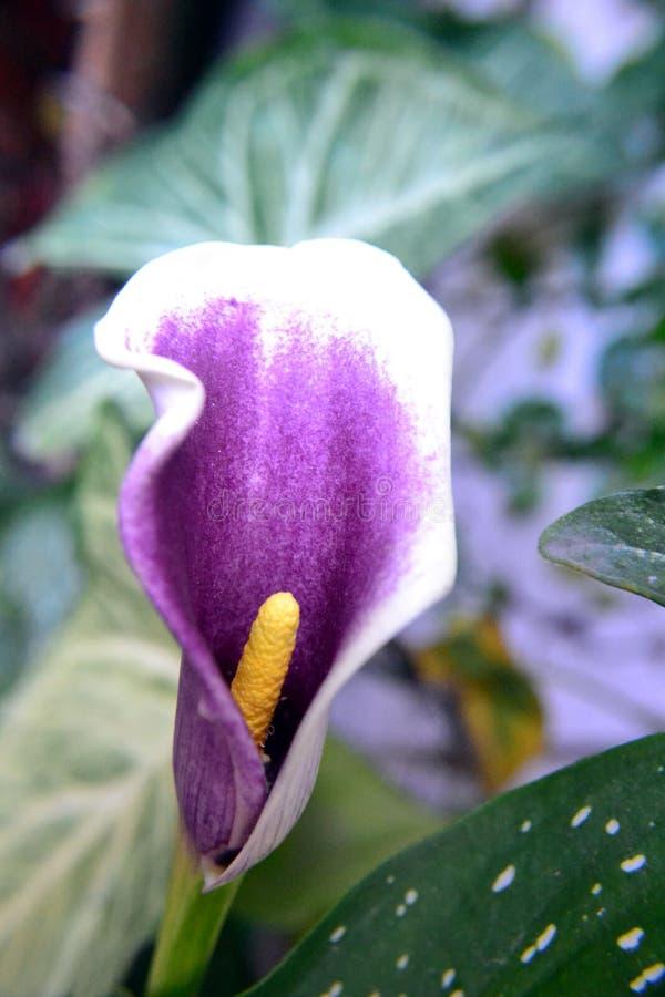 Sfuocature del fiore fotografie stock