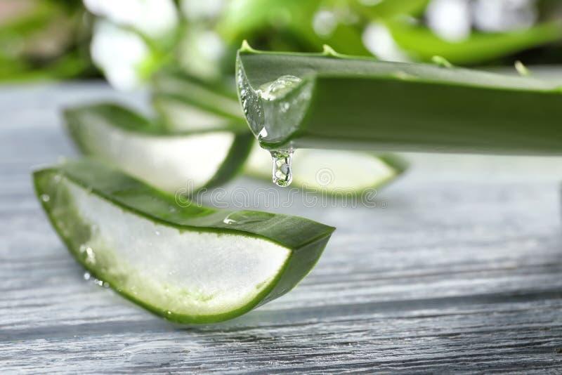 Sgocciolatura del succo di vera dell'aloe dalla foglia verde, primo piano immagini stock libere da diritti