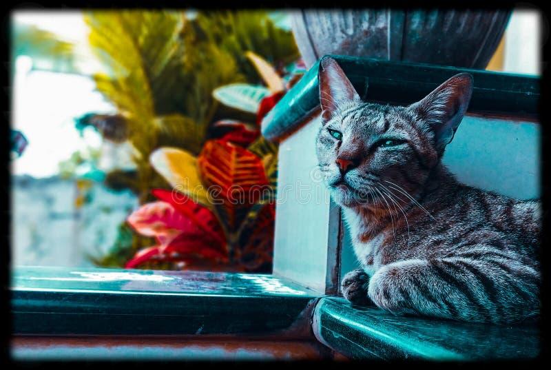Sguardi dei gatti fotografie stock libere da diritti