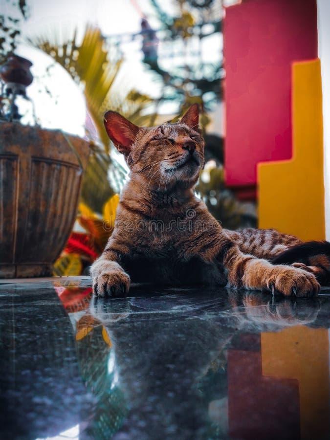 Sguardi dei gatti immagini stock libere da diritti