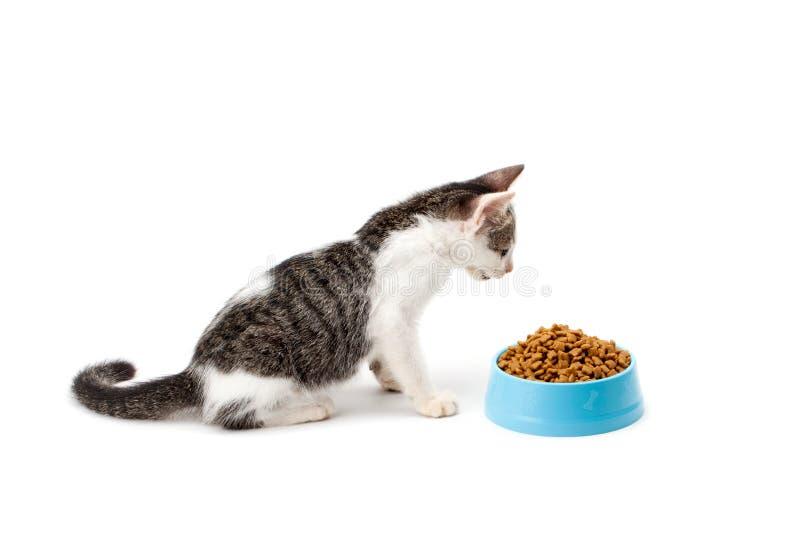 Sguardo in bianco e nero del gattino ad alimento secco animale domestico immagine stock
