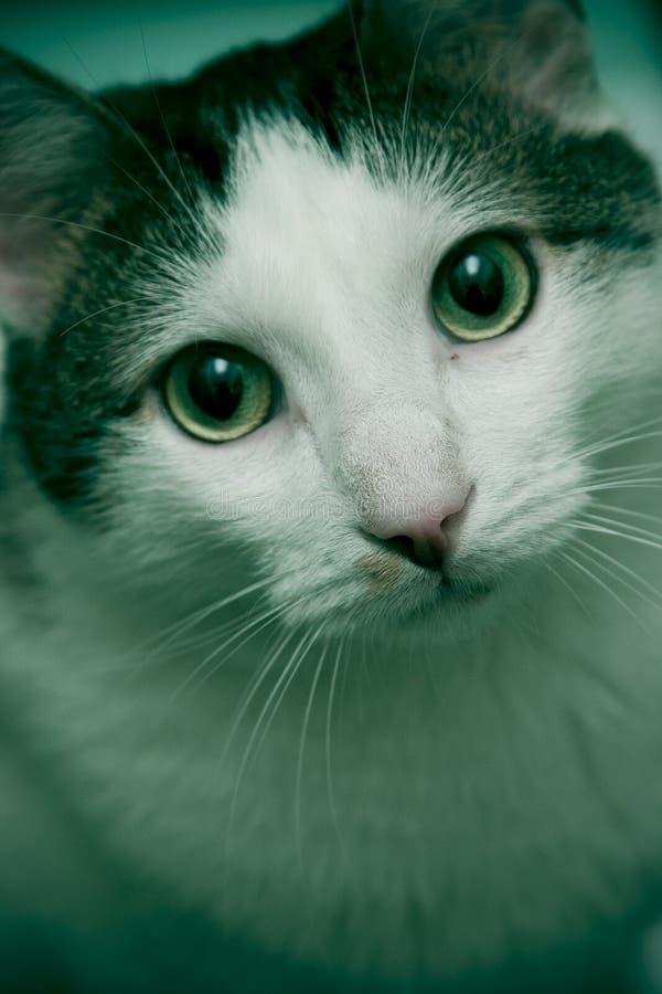 Sguardo del gatto fotografia stock