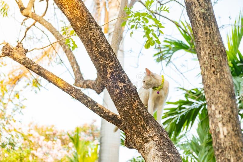 Sguardo fisso bianco impertinente del gatto a qualcosa fotografia stock libera da diritti