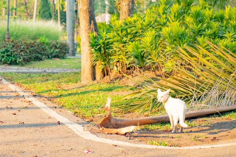 Sguardo fisso bianco impertinente del gatto a qualcosa immagine stock