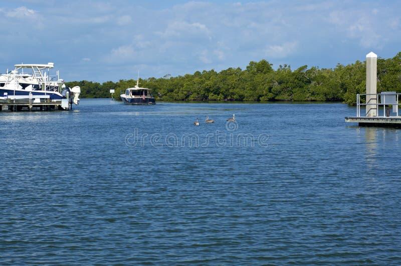 Sguardo fuori sopra la baia con i pellicani e le barche in Florida fotografia stock libera da diritti