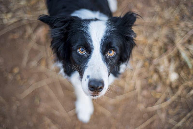 Sguardo nobile di un cane fotografia stock