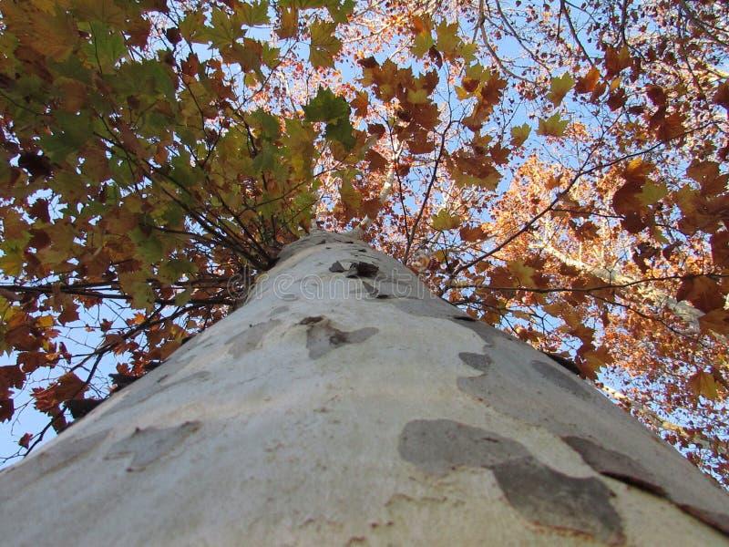 Sguardo in su dell'albero fotografia stock
