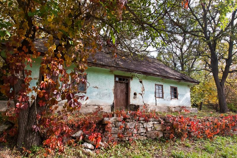 Shabby and worn old country house, yard with ivy vine growing on trees and ground, desolation stock image