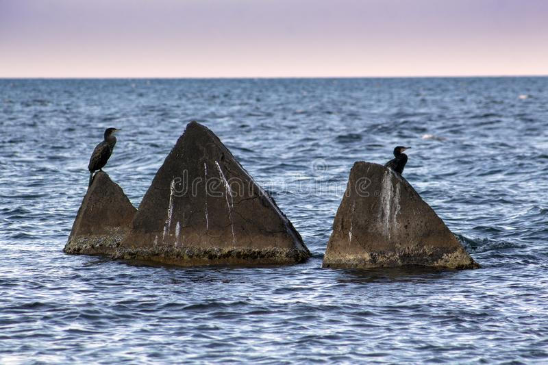Seascape. Concrete pyramids with cormorants. royalty free stock photography