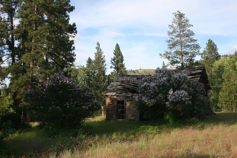 Shack in the woods. Wooden shack in grassland and trees royalty free stock images