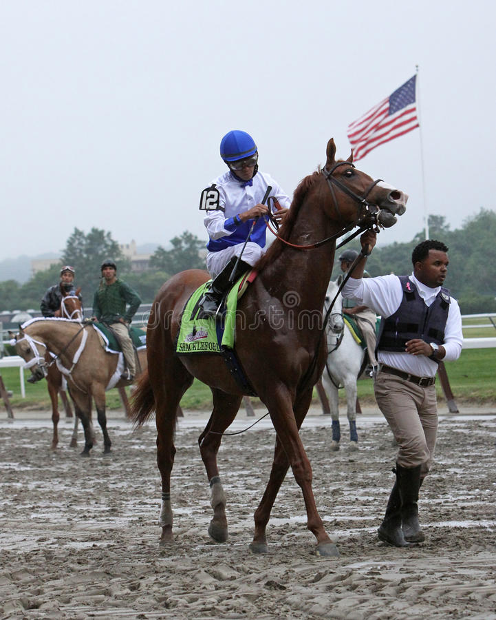 Shackleford Enters the Gate for The Belmont Stakes