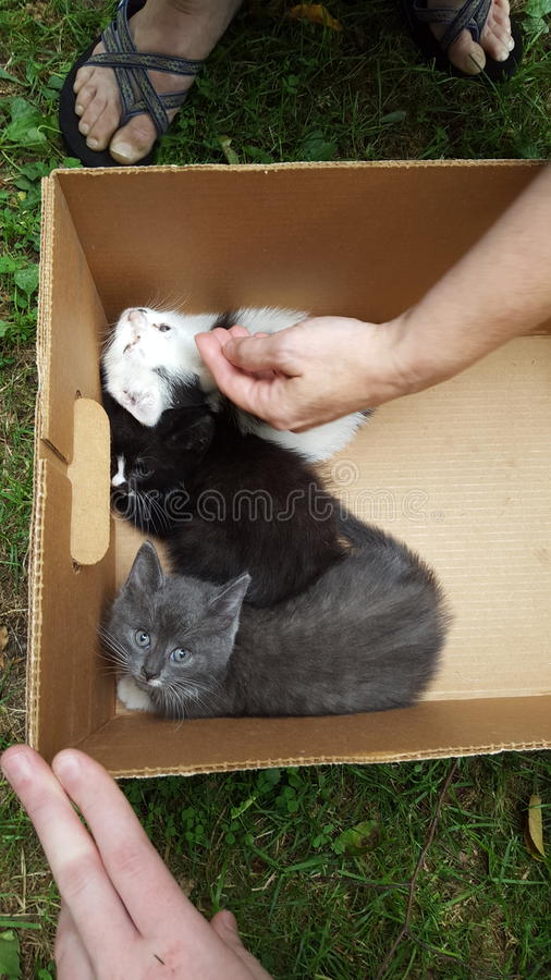 3 shade of cute! royalty free stock photos